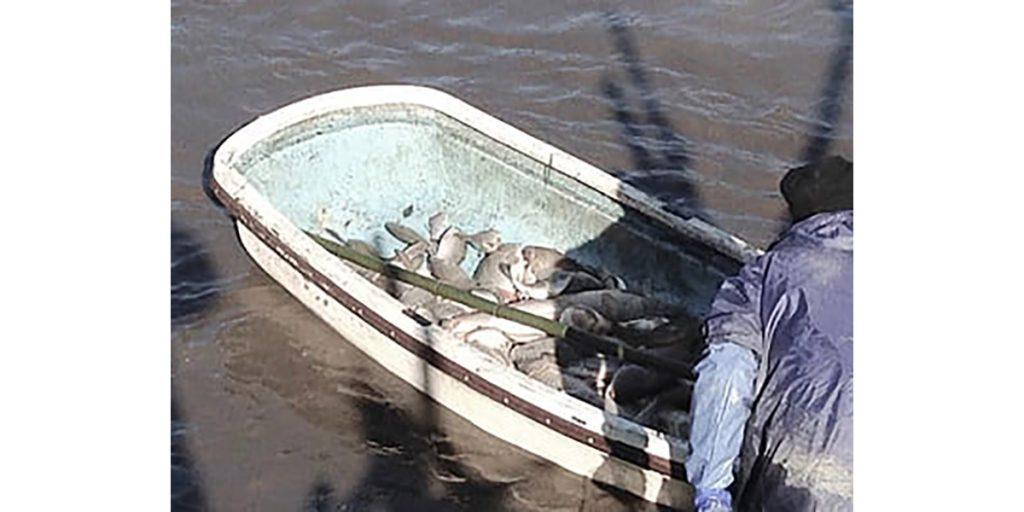 広沢池の鯉揚げ(こいあげ)