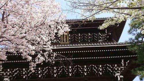 金戒光明寺の山門と桜