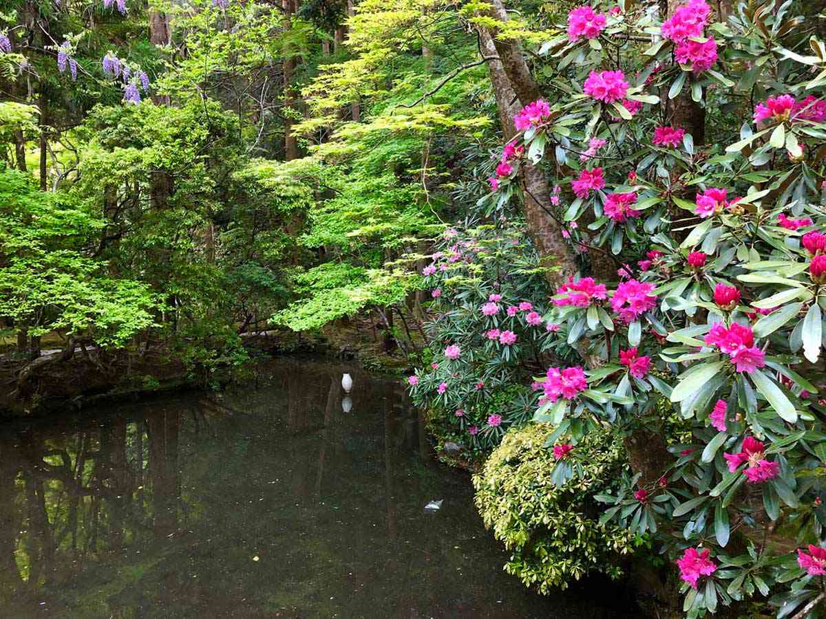 法然院の百砂壇と新緑