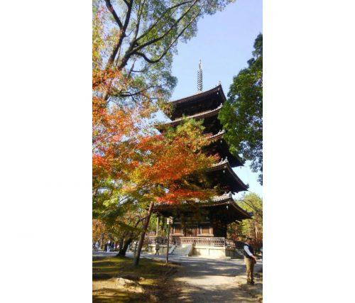 仁和寺の五重塔と紅葉