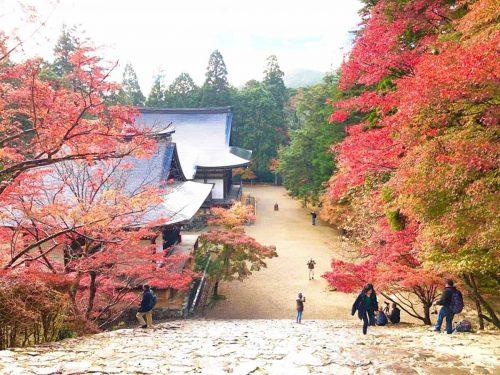 古刹 神護寺の紅葉