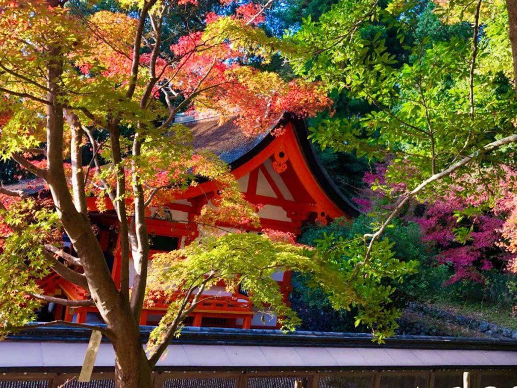 亀岡 出雲大神宮の紅葉