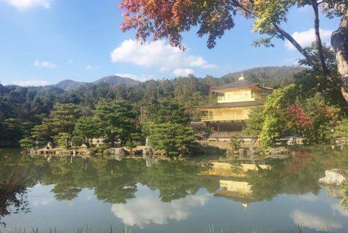 金閣寺の紅葉も始まりました