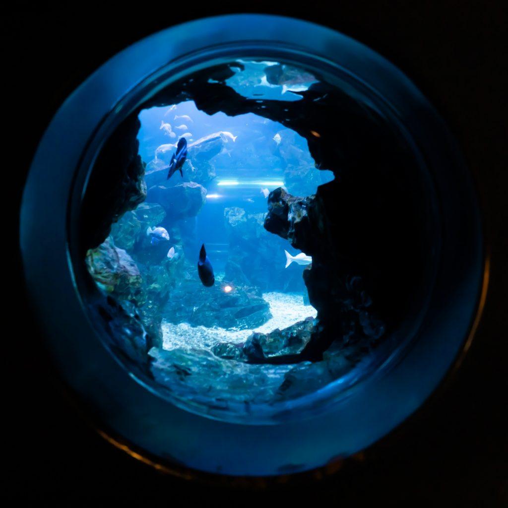 京都水族館 さめの洞窟 夜のデート 夢館浴衣レンタル