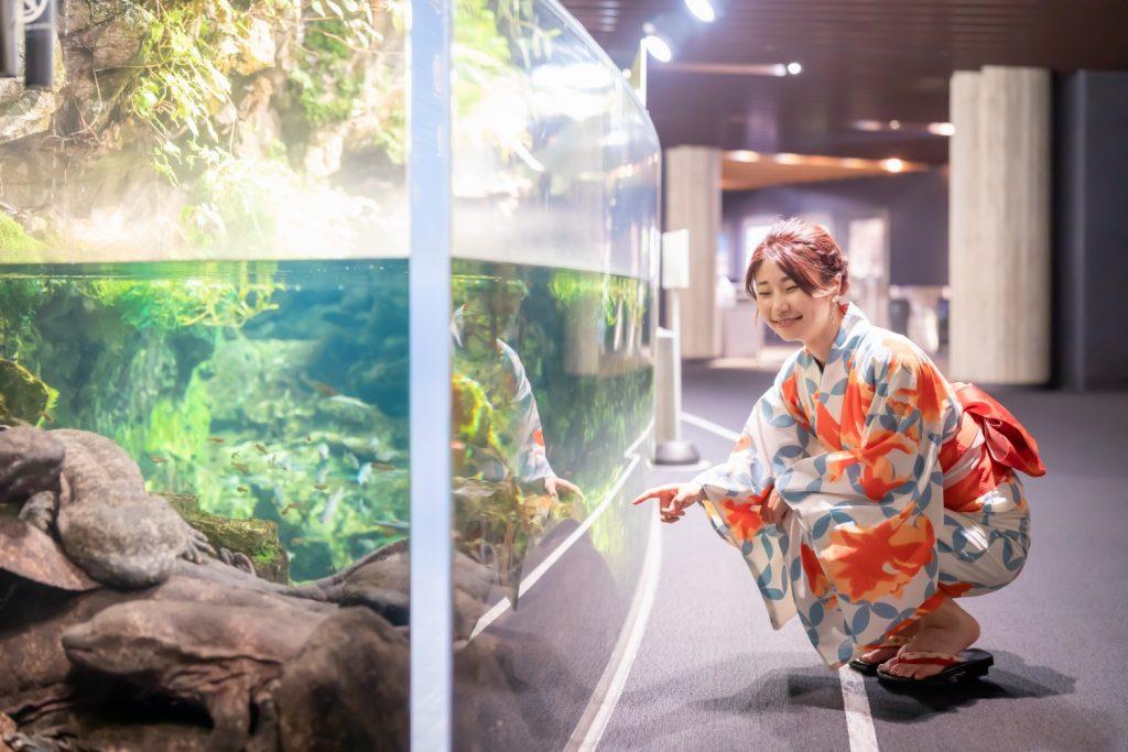 京都水族館 オオサンショウウオ 夜のデート 夢館浴衣レンタル